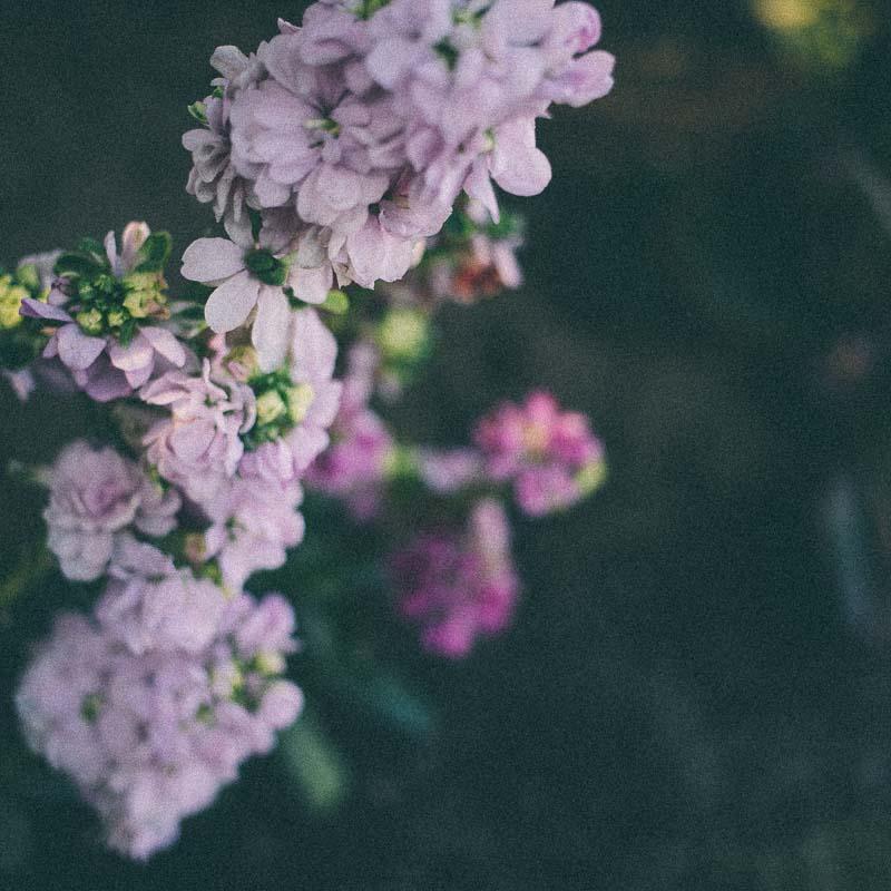 スクエアフォーマット写真 背の高い花
