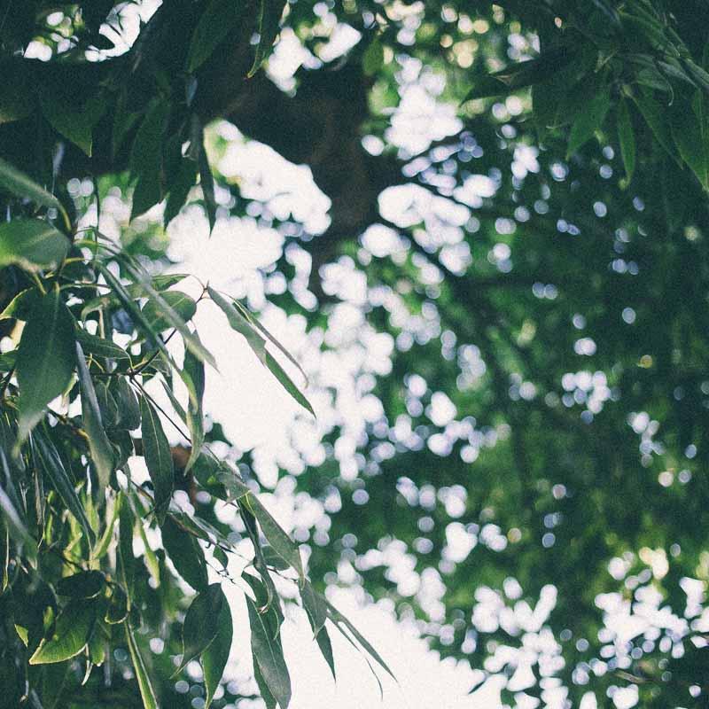スクエアフォーマット写真 樹木、葉、玉ボケ