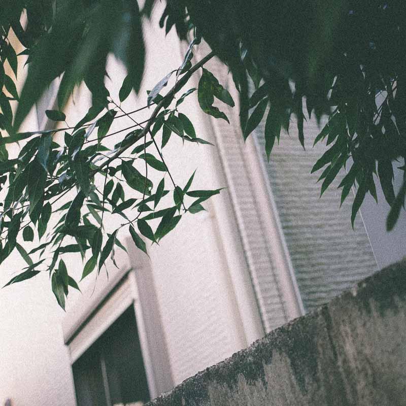 スクエアフォーマット写真 壁、塀、葉