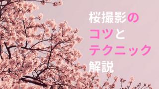 桜撮影のコツとテクニック
