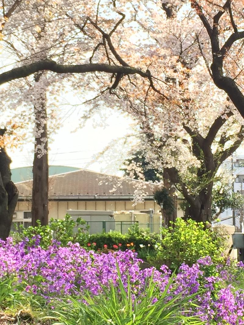【写真の撮り方】SNSでいいね!がもらえる桜撮影のコツその1photo2