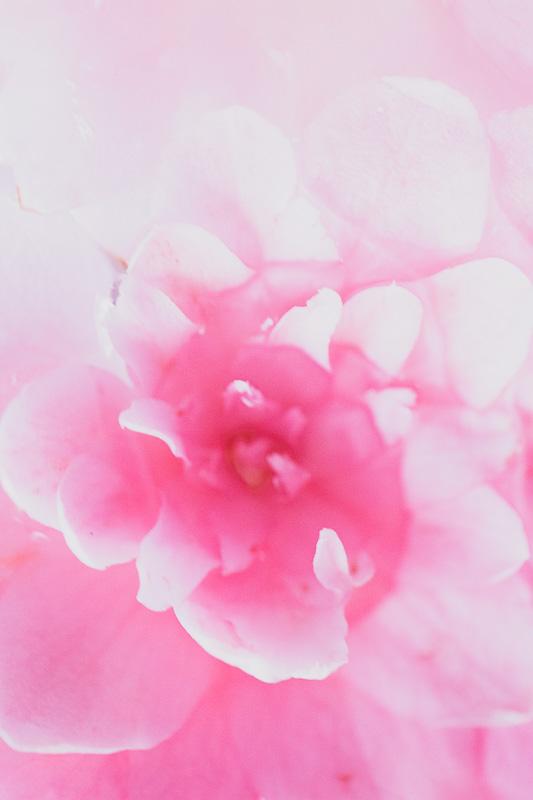 EF100mm F2.8Lマクロ IS USMレンズで撮影した花