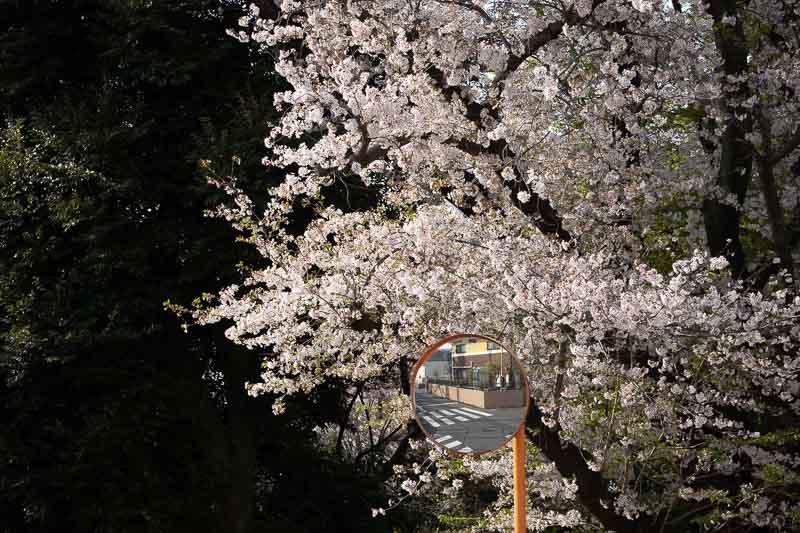 Sigma 56mm F1.4 DC DN Contemporary レンズ作例(撮影:ちゃんまり) 圧縮効果を使ったフラットな風景スナップ写真